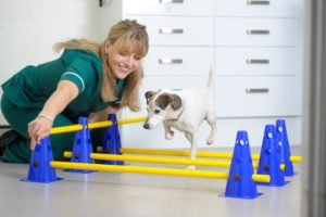 Physiotherapy for Animals