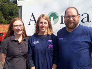 avonvale vets dentistry training by an expert