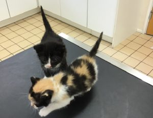 avonvale veterinary centres kittens