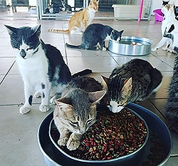 cats-in-a-shelter-cyprus