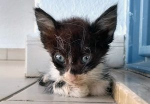 kitten in care of avonvets in cyprus