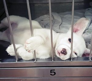 puppy-in-a-shelter
