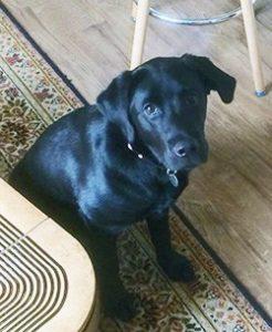 dogs-warwickshire-vets