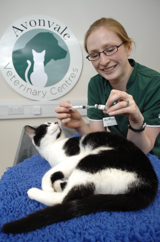 vaccination for cats2017