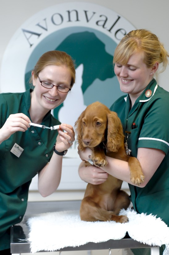 vaccination for dogs2017