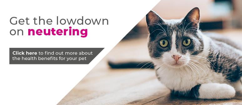 Cat neutering in Kenilworth