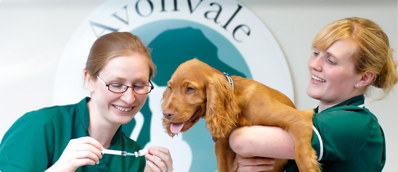 Avonvale Veterinary Centres in Warwick, Kenilworth, Heathcote